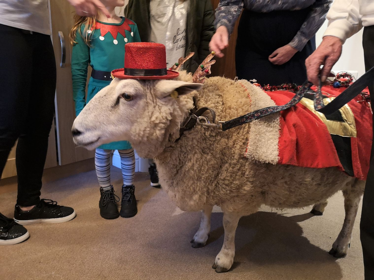 Kingston Care Home in Kingston-upon-Thames have a visit from Amy the sheep