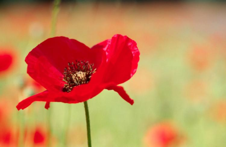 Cookridge Court Care Homes Poem For Remembrance Day Brighterkind