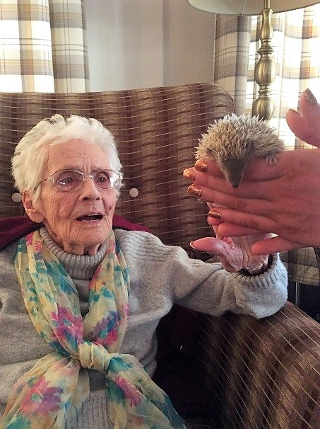 Resident Mary meeting the tenrec, part of the mole family