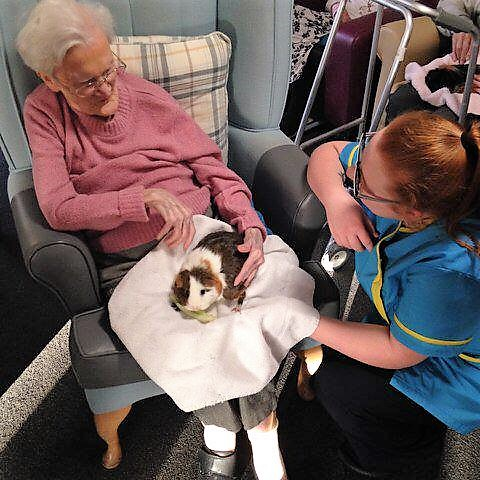Resident Molly enjoying feeding a guinea pig on her lap with Carer Fern