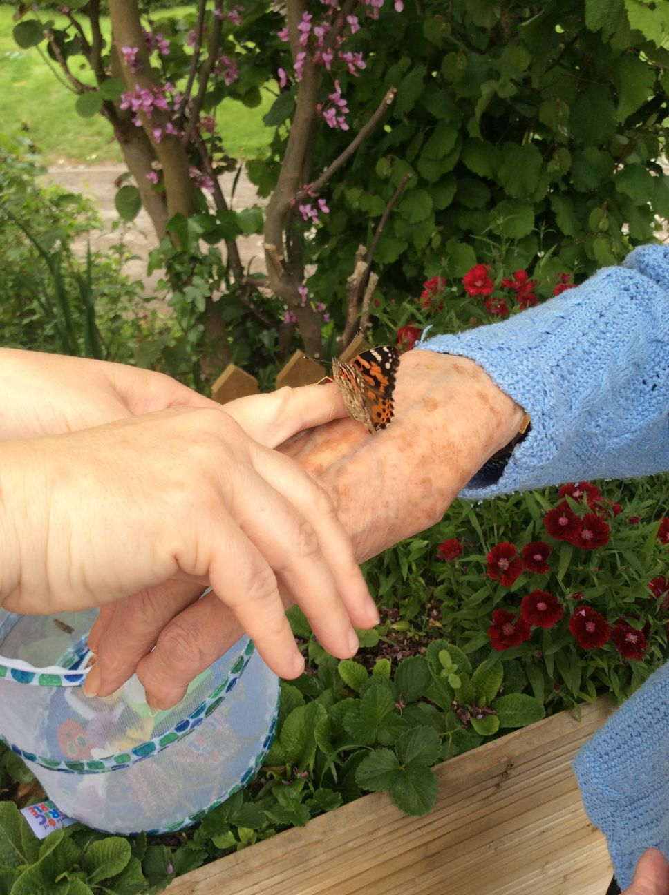 Highfields Care Home, Newark-Releasing our first butterfly