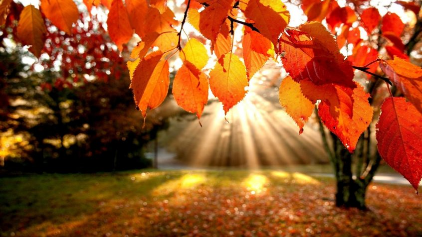 Autumn memories at Ross Court Care Home