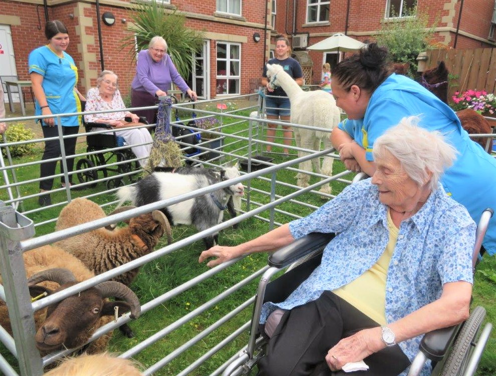Westbury Court Care Home, Wiltshire-Our garden became a farmyard for the afternoon!