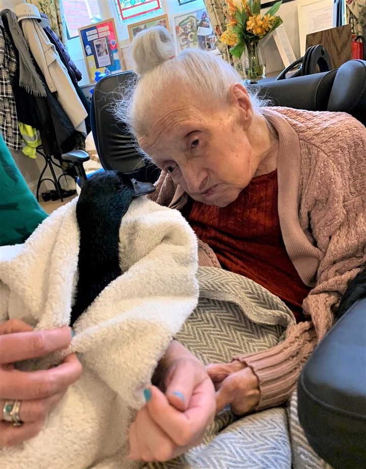 Woodbury House Care Home, Berkshire-Resident Kath meeting one of the Cayuga ducks as part of her Wishing Well wish come true