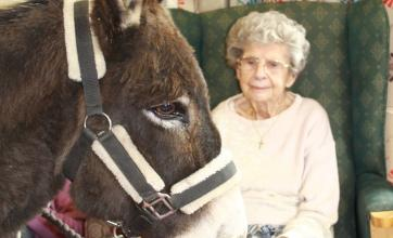 Ashbourne Court Care Home in Hampshire get a visit from Barney the Donkey