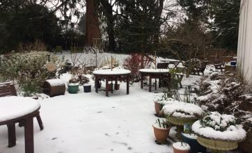 The Berkshire's garden covered in snow