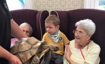 Ross Court Care Home, Herefordshire-Resident Pam holds Arthur as they meet Archie the tortoise