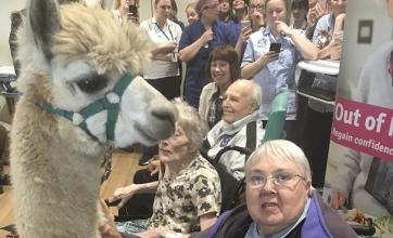 Resident Bridget Fletcher with Cosmo the Alpaca at Tewkesbury Community Hospital