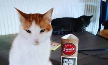Feline resident