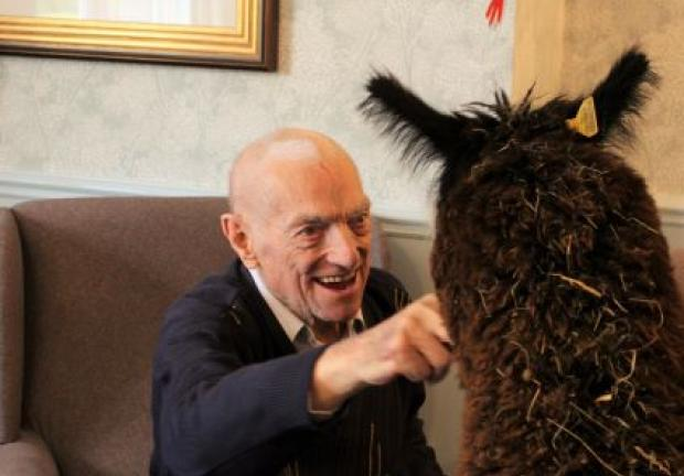 The Alpacas visit residents at Ivybank in Bath