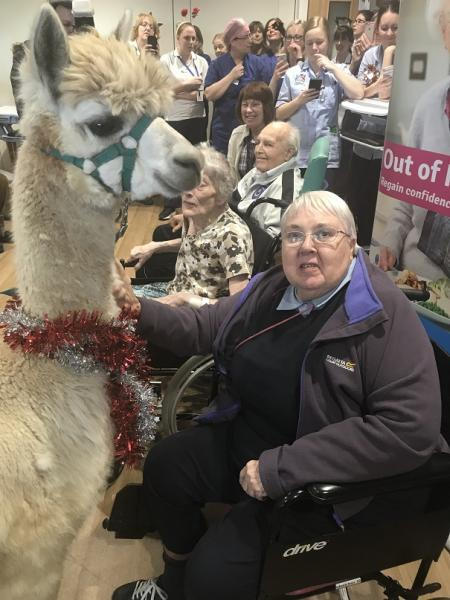 Resident Bridget Fletcher with Cosmo the Alpaca at Tewkesbury Community Hospital