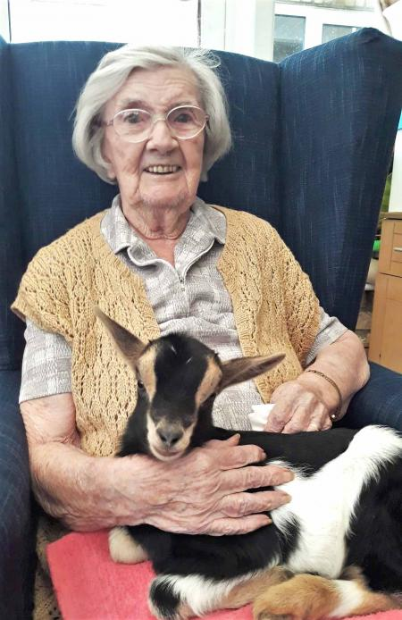 Residents at Highfield Care Home in Ware are seeing in the spring with baby goats and chicks