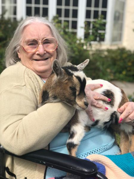 Residents at Hungerford Care Home in Berkshire enjoy a visit from the farm