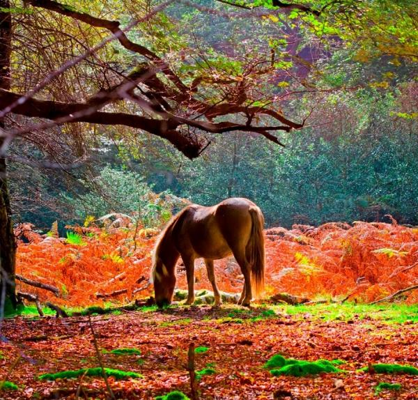 The beautiful New Forest in autumn