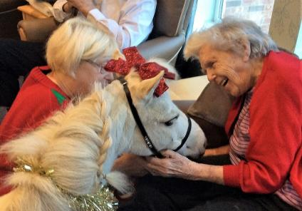 Leeming Bar Grange Care Home, North Yorkshire. A festive visit from Blondie the Miniature pony on 19th December. Resident Rene was delighted to meet the lovely pony