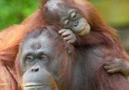 Some of the wonderful residents of Monkey World