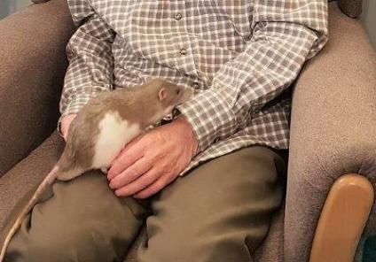 Jonathan has a little cuddle with a rat