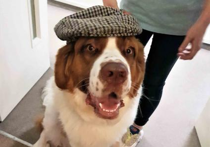 Charlotte House Care Home in Bebington were solving the mystery of 'who stole the cake'. They had a special guest, detective dog Henry who helped find the evidence!